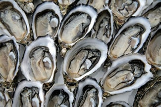 shellfish-oysters01 Mississippi Oyster Season Opens Early for Local Oystermen